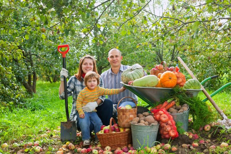 despre plantarea legumelor in gradina. Poza 230
