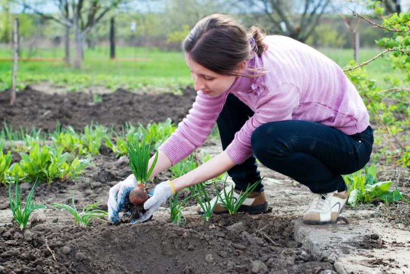 despre plantarea legumelor in gradina. Poza 231