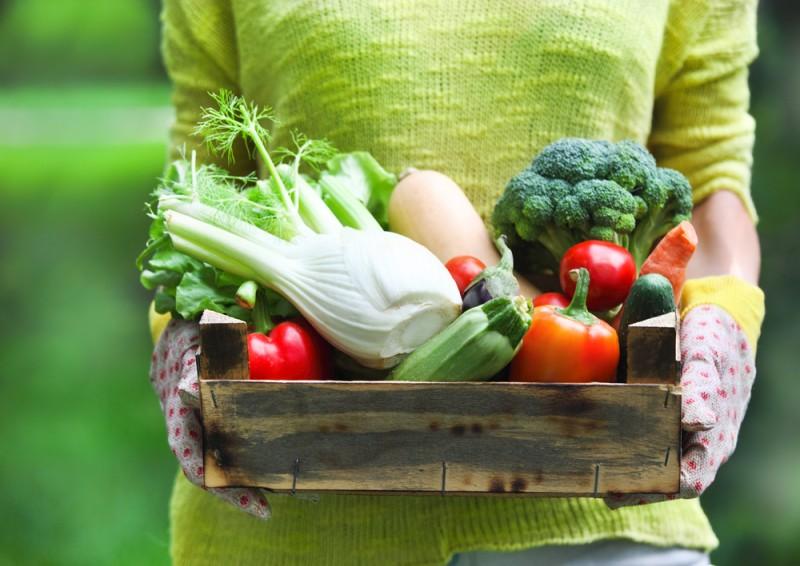 despre plantarea legumelor in gradina. Poza 232