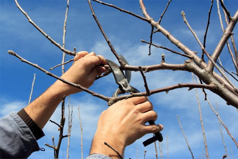 pregatirea pomilor de iarna