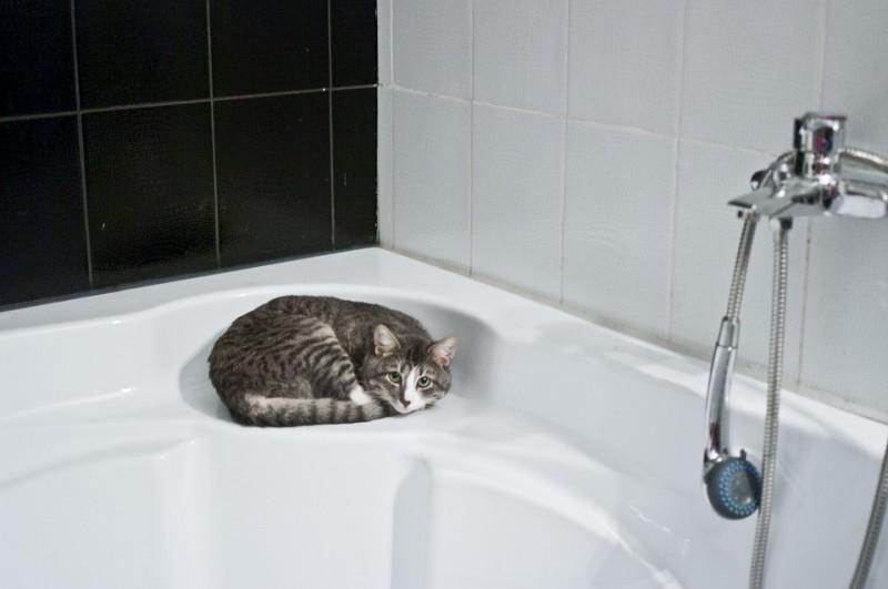 Ghid amenajare sau renovare baie. Poza 279