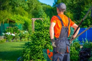 Lucrări de toamnă în grădină și în livadă. Poza 237